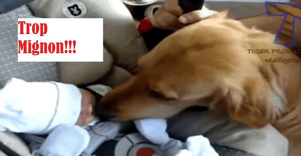 compilation de bébé qui rencontre des animaux