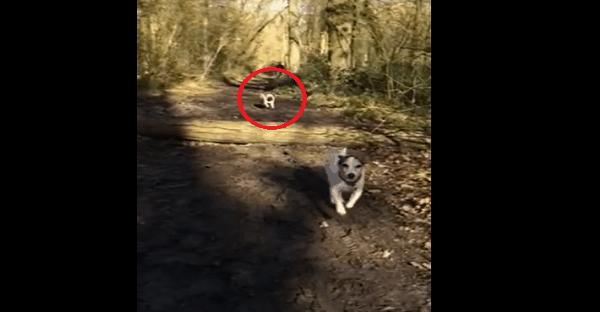 chien qui chute dans le bois