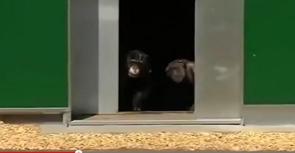 Des animaux en cages. Voyez leur réaction quand ils deviennent libres pour la première fois. EXCEPTIONNEL!