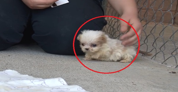 Ce petit chiot a été rescapé, voyez ce qui lui arrive. TROP CUTE!