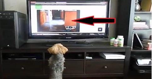 chien qui saute devant un téléviseur
