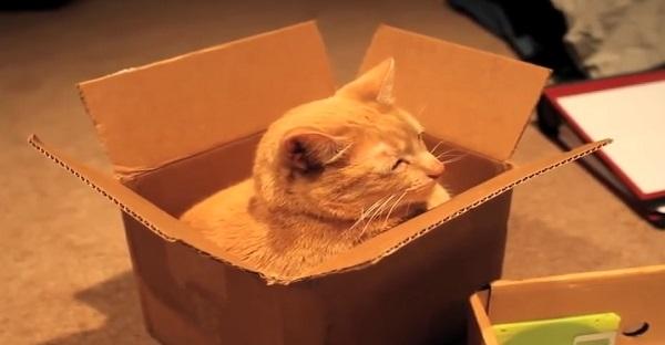 Les chats et les boîtes de carton. Cette relation AMOUREUSE DÉMYSTIFIÉE!