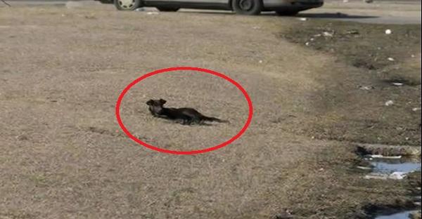 Une chienne est découverte le long de la route. Mais l'histoire ne s'arrête pas là. ÉMOUVANT!