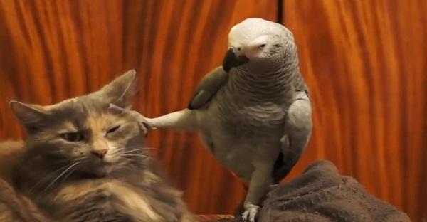 Les 15 secondes les plus drôles. Mais pas pour ce chat. MDR TROP MARRANT!