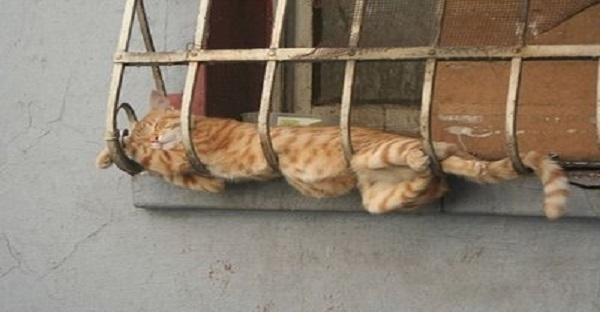 Il ne trouvait pas un lit douillet pour son chat difficile. Voyez ce qu'il a construit. GÉNIAL LE MEC!