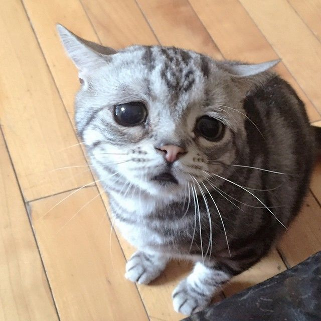 chat triste 7
