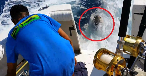 À la pêche au Marlin, il fera une rencontre INOUBLIABLE. ÇA VAUT LE DÉTOUR WOW!