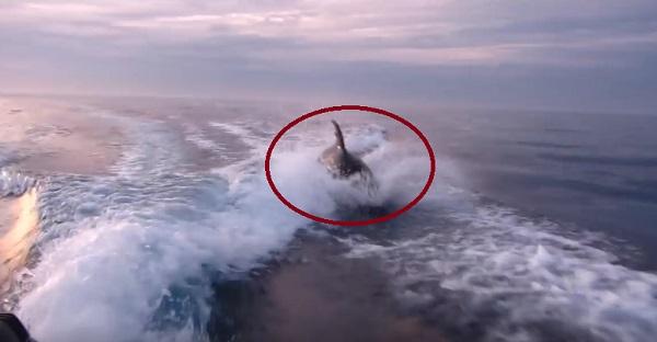 Quand une orque décide de s'amuser. Des images MAGNIFIQUES!