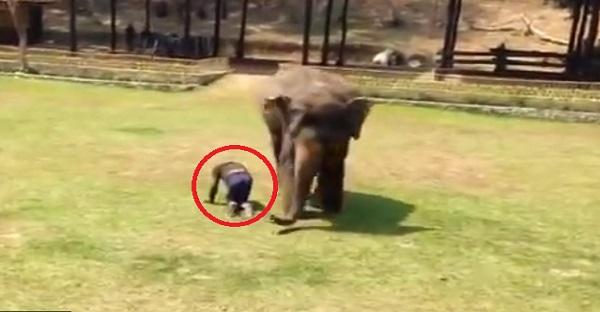 éléphant-amitié-animaux-homme-défense
