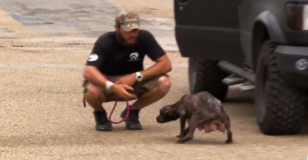 Il trouve une chienne abandonnée, mais où sont ses chiots?