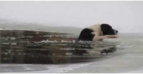 chien eau glacé