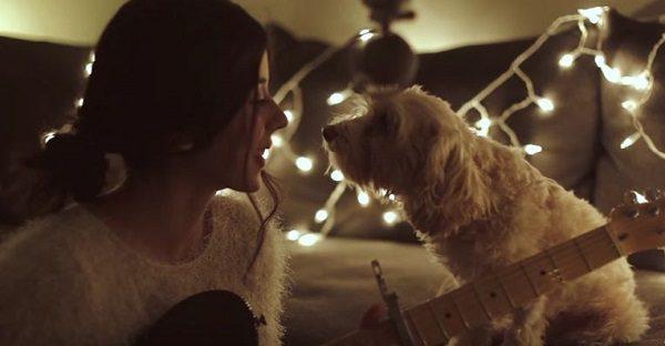 tout-simplement-magnifique-guitare-et-son-chien