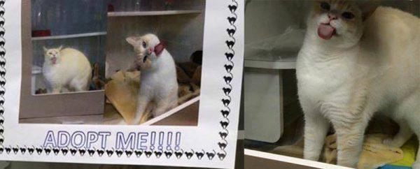 Très malin, ce chat a trouvé la technique la plus géniale pour se faire adopter. Et ça marche !